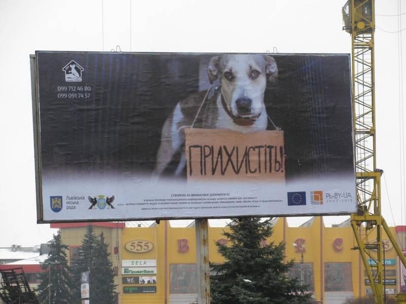 В Івано-Франківську з'явились білборди з безпритульними тваринами