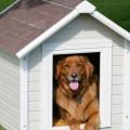 """""""Дім Сірка"""" не може купити будки для собак калуського притулку. РЕКВІЗИТИ"""