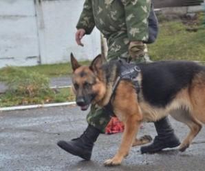 В Івано-Франківську тренують собак-саперів для зони АТО
