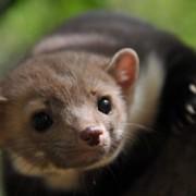 В Галицькому центрі реабілітації диких тварин з'явився новий мешканець зі столиці