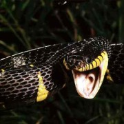 Двоє прикарпатців потрапили до реанімації через укуси змій