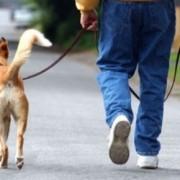 Нові правила вигулу собак по-франківськи (відео)