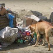 Собака знайшла у смітнику новонароджене немовля і принесла до людей