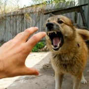 У Калуському районі зареєстрували сказ домашнього собаки