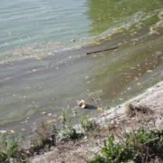 Екологічне лихо. Мера запрошують відвідати «перлину» туристичного Франківська. ВІДЕО