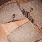 Цвях у хлібі чи гриб у соці: Прикарпатці скаржаться на неякісні продукти (відео)