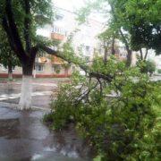 На 15-річну школярку у Львові впало дерево. Дитина в лікарні