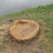 """Руслана Василюк про вирубку довкола озера: """"Згідно із Законом на дамбі не можуть рости дерева"""""""
