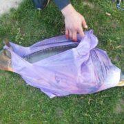 На озері в Івано-Франківську рибалка впіймав коропа-велетня. ФОТОФАКТ