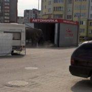 Жив був слон: у Франківську на автомийці помітили незвичного клієнта. ФОТОфакт