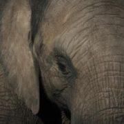 Франківці вимагають заборонити виступати циркам, які використовують диких тварин