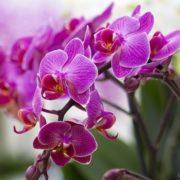 Ніколи, ніколи не тримайте орхідею вдома! В офісі — можна, вдома — ні