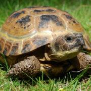 У Франківську на вокзалі знайдено ящик з черепахами (фото)