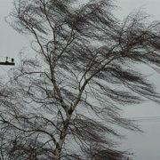 На Прикарпатті синоптики оголосили штормове попередження