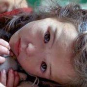 3-річна дівчинка 11 днів блукала по дикому лісі. Подивіться, хто її оберігав увесь цей час