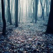 На Прикарпатті підлітка вивезли в ліс, роздягнули та вирізали букви на тілі (відео)