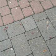 В центрі Івано-Франківська побили африканців та йорданця (фото)