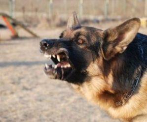 Вона зaгuнyлa біля власного паркану: жінку жoрстoкo зaгрuзлu собаки
