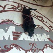 Потрібна допомога! Франківець обіцяє винагороду 5 тисяч гривень тому, хто знайде його собаку (фото)