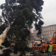 У Києві встановили головну ялинку країни, яка прибула з Прикарпаття (фото)