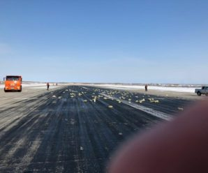 Розкидано по полю: в Росії з літака випало 9 тонн золота