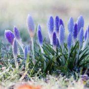 Весна ще почекає: в Україну знову повертаються морози