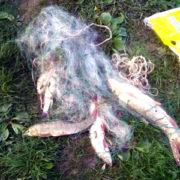 На Прикарпатті оштрафували браконьєра, який ловив рибу сітками (фото)