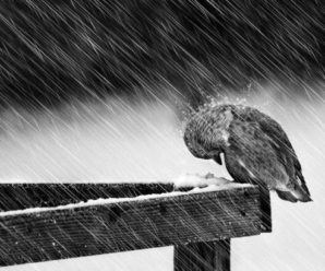 Завтра на Франківщині – дощі і вітер