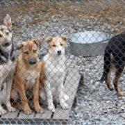 Калуські активісти збирають усе необхідне для собачого притулку