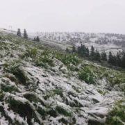У Карпатах знову випав сніг (ФОТО,ВІДЕО)