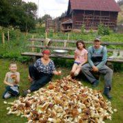 За один вихід у ліс родина з Путильщини назбирала 92 кг грибів