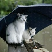 Відомий синоптик попередила про різке погіршення погоди на Прикарпатті