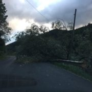 На Франківщині через дощ та шквалистий вітер повалено понад десяток дерев, пошкоджено лінії електропостачання. ВІДЕО