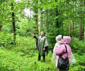 """На Косівщині вирубали ліси, """"забувши"""" згадати про це в документах"""