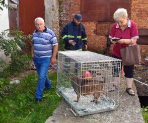 У Надвірній врятували собаку, який рік прожив під землею