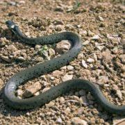 На Львівщині до лікарні потрапила дитина, яку вкусила змія