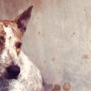 У Калуші серед собак поширилася небезпечна епідемія. ВІДЕО 18+