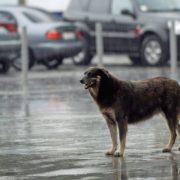 На заході та півдні України оголосили штормове попередження