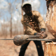 Прикарпатський лісгосп заплатить чотири мільйони гривень за незаконну рубку лісу
