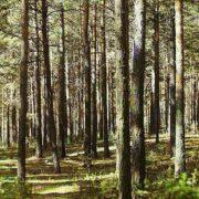 На Прикарпатті цілу ніч шукали зниклого в лісі чоловіка, пошуки тривають