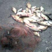 З Бурштинського водосховища витягнули браконьєрські сіті з понад 40 кілограмами риби. ФОТО