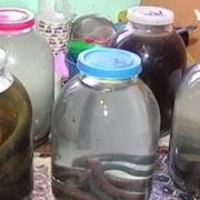 Змії проти онкології. У Карпатах цілителька лікує настоянками з плазунів та мухоморів. ВІДЕО