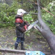 На Прикарпатті на дорогу обвалилося дерево і перекрило рух