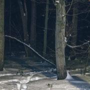 Зниклого безвісти чоловіка знайшли мертвим у лісі