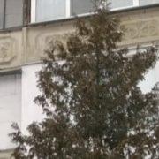 Підлітку, який у Франківську випав з 7-го поверху, врятувала життя ялинка (Відео)