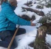 Лопату і в ліс: на Прикарпатті збирають гриби з-під снігу (ВІДЕО)