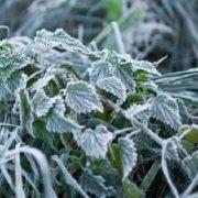 В Україну повернулись заморозки: оголошено перший рівень небезпеки