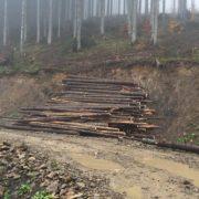 Де на Прикарпатті найбільше рубають ліс