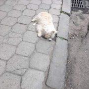 У Франківську пенсіонер викинув собаку з 3-го поверху багатоповерхівки (Фото)