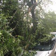 Дерева вирвало з корінням – наслідки 20-хвилинної бурі на Прикарпатті. ФОТО